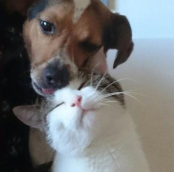 Adoptieren Sie einen Hund oder eine Katze!