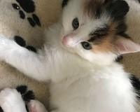 Bieten Sie eine Pflegestelle für eine Katze an!