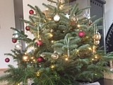 Weihnachtsgrüsse von Cuno, Charly & Goya