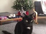 Blacky ehem. Caled schickt Weihnachtsgrüsse