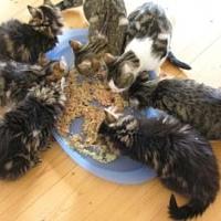 Schrebergartenkatzen