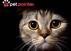 petpointer - Wo ist mein Liebling?