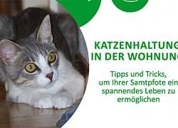 Katzenhaltung in der Wohnung