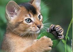 Merkblatt Giftpflanzen für Katzen