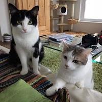 Bao & Yami