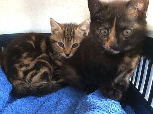 Silk und Tina