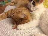 Merlin und Ella grüssen aus ihrem neuen Zuhause