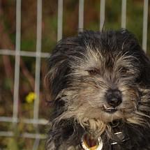 Leroy in Rumänien