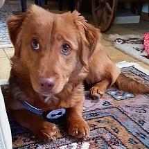 Bentley in seinem neuen Zuhause