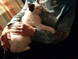 Mino fühlt sich pudelwohl Zuhause