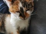 Julia - mit 10 Jahren endlich in einem liebevollen Zuhause angekommen :-)