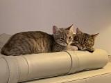 Raika (Ayoka) & Sunny (Sivo) unzertrennlich