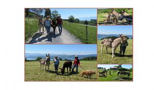 Spaziergang mit Eseln; Sonntag 19.09.2021