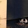 """Spenden für Kastration """"Katzen im Elsass"""""""