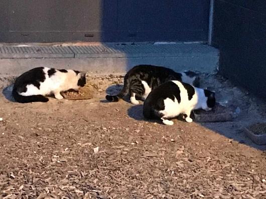 Herrenlose Katzen im Elsass