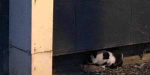 Streunende Katzen im Elsass
