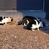 Futter für die Elsasskatzen