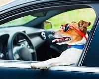 Schenken Sie einem Hund ein Einreiseticket