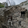 Hilferuf für Santorini