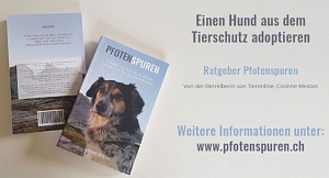 Ratgeber: Ein Hund aus dem Tierschutz