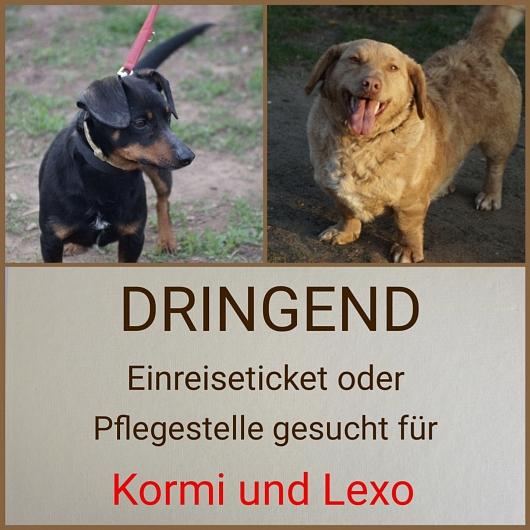 Hilfe für Kormi und Lexo