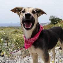 Nikita in Santorini
