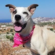 Daisy in Santorini