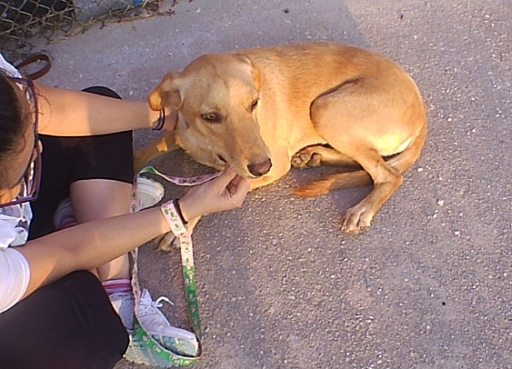 Kanela in Griechenland