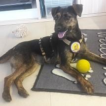 Tinka bei ihrer Pflegestelle