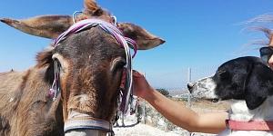 Hilfe für die Tiere in Griechenland