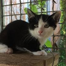 Kitten aus dem Jura für Wohnung und Freigang