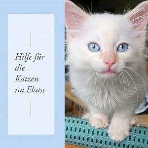 Hilfe für die Katzen im Elsass