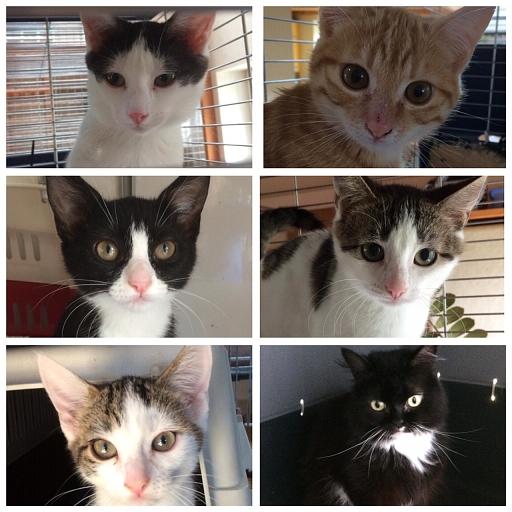 Kitten aus dem Jura