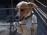 Adoption von Tieren aus dem Ausland