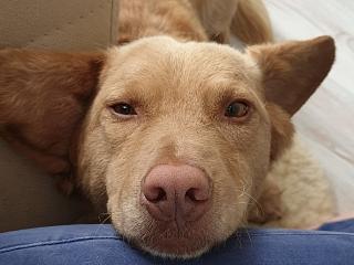 Überlegungen vor der Adoption eines Tieres