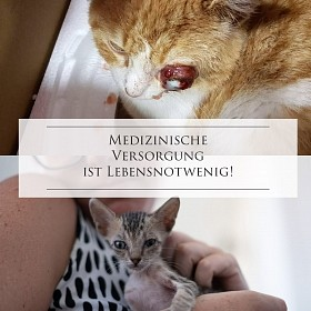 Medizinische Versorgung: für Streunerkatzen im Elsass