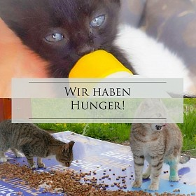 Futter: für Katzen im Elsass