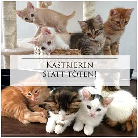 Kastration: Katzen im Elsass