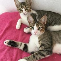 Romeo & Schatzi