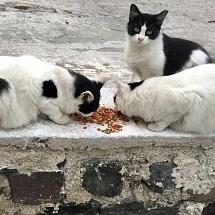 Mami, Sari,  Sitka