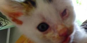 Ein Tierheim: Hilfe für das Katzenelend im Elsass
