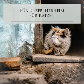 Tierheim: Für die Katzen im Elsass