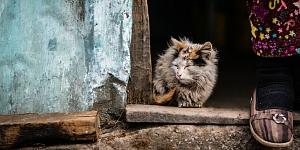 Katzenkastrationsaktion im Elsass