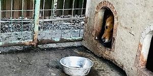 Futter für die Hunde in der Slowakei