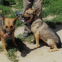Mano & Juci im Tierheim Hurbanova