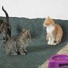 Unterstützung für ein Katzenzimmer in Lucenec